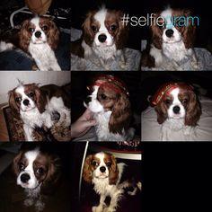 Můj Pejsek Charlie/My Dog Charlie 12.12.2014