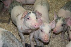 Åtta av tio: Djurskydd viktigt när vi handlar