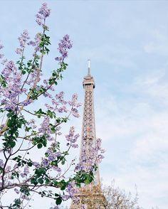 my new iPhone wallpaper   good morning world!   я приехала в Париж в конце периода цветения деревьев, но немного этой редкой весенней красоты мне всё же удалось увидеть ☺️ а это фото – моя новая любимая заставка в телефоне  всем доброго утра!  #mayaklyam_à_paris