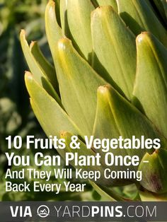 Neato - | Check out these other to die for inspirations for top rated fruit…