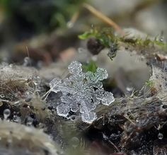 Snow flake, macro photo image - Pixdaus