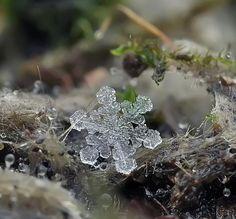 Snow flake, macro photo image - Pixdaus
