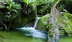 10 fascinating facts about one of the most beautiful and breathtaking areas of Australia, the Daintree Rainforest. Read this post to find out more about this part of the world. Cairns Queensland, Cairns Australia, Mother Earth, Mother Nature, Rainforest Facts, Daintree Rainforest, Surfing, Journey, Tours