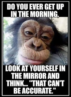 good morning quotes funny * good morning quotes + good morning + good morning quotes for him + good morning quotes inspirational + good morning wishes + good morning beautiful + good morning quotes funny + good morning greetings Funny Signs, Funny Jokes, Hilarious, Funny Monkey Memes, Haha Funny, Funny Life, Funny Happy, Fun Funny, Quotes Distance
