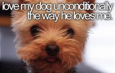 I love my dog as much as it is possible for someone to love anything or anyone. <3<3<3<3