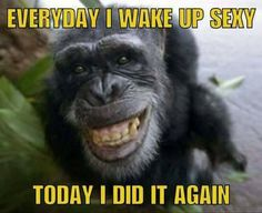 good morning funny pictures ~ Memes , best funny pictures ` funny pictures lol ` good morning funny pictures ` really funny pictures ` happy funny pictures ` very funny pictures ` Good Morning Funny Pictures, Really Funny Pictures, Funny Good Morning Quotes, Funny Photos, Morning Humor Quotes, Funniest Photos, Animal Jokes, Funny Animal Memes, Funny Animals