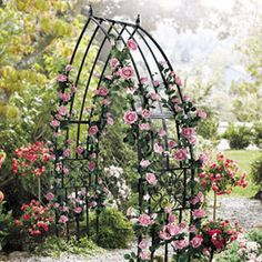 Black Iron Scrolled Medallion Cathedral Arbor $124.95
