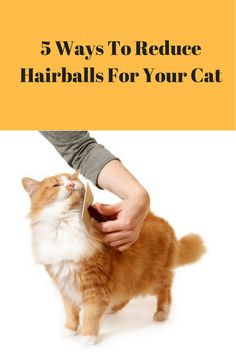 Hairballs are a fact