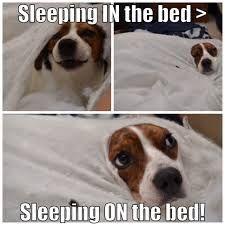 Afbeeldingsresultaat voor beagle