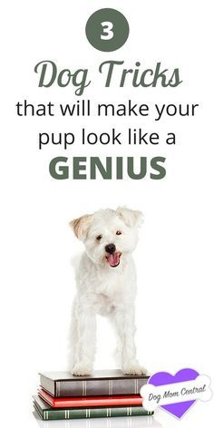 Teach your dog these fun, inventive tricks that will blow your friends and family away. Your dog will definitely look like a genius.
