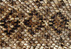 animal skin wallpaper | Animal Print Wallpaper Free Download - Snakeskin, crocodile and ...
