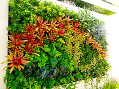 garden planted vertical on a wall with red and green plants