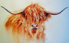 How to paint a highland cow in 7 easy steps – watercolours by rachel Watercolor Paintings Of Animals, Watercolor Paintings For Beginners, Art Watercolor, Animal Paintings, Paintings Of Cows, Highland Cow Painting, Highland Cow Art, Highland Cattle, Cow Drawing