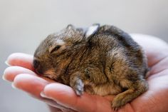 "Baby-Kaninchen ""Rüdiger"""