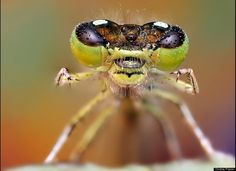 """""""Rowr"""".       Dew-Soaked Bugs Are 'Small Monsters' In Ondrej Pakan's Macro Photo Series (PHOTOS)"""