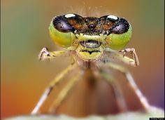 yellow bug eyes