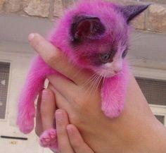 Pink Kitty?