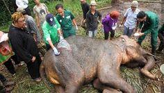 """""""O Grito do Bicho"""": Elefante chorando gera petição para fechar 'Zoo da..."""