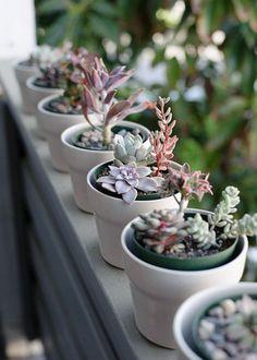 Aligner des plantes grasses et des cactus