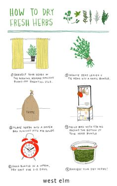 Don't let your indoor herb garden go to waste this year!
