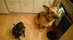 Mit hundeliv med Vaks.: Et sødt øjeblik... / An aww moment.