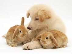 Puppy with rabbits!