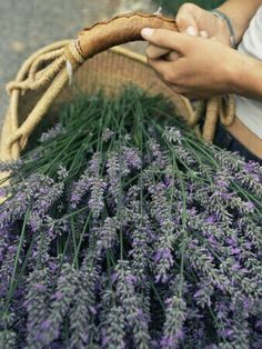 lavender from the garden....
