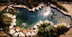 My swimming pool on pinterest natural swimming pools for Swimming pool koi pond conversion