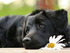 この表情がたまらなく好きです。犬と花の組み合わせっていいなあ。