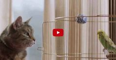 Have You Seen This Commercial Yet?  A Singing Cat! I Love it!