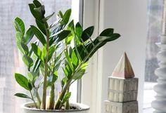 10 növény, ami a sötét sarokban is elvan