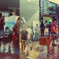 Fun & games with the 4 legged folks so much better than hangin' with humans. #aboutyesterday #doggiesdayout #labrador #husky #greatdane #woofs by phukan.radha