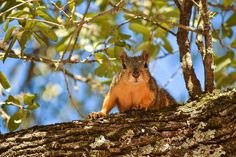 Squirrel, Tree, Leaves