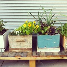 wooden boxes painted for flowers, herbs & greens