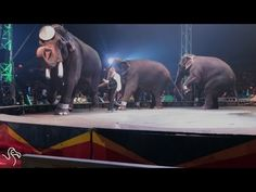 """""""This video exemplifies why circuses are incompatible with elephant well-being, let alone thriving,"""" she said. """"From the level of sound and commotion surrounding the elephants on display, it would not be too much of an overstatement to say that they are losing their minds."""" Sign the petition against UNIVERSALSOUL CIRCUS! NEVER GO TO THE CIRCUS!!"""