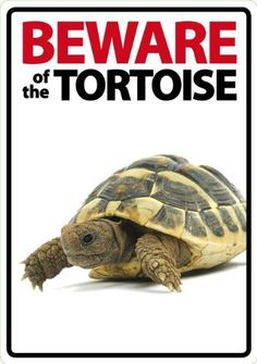 Magnet & Steel Beware of The Tortoise Plastic Sign by Magnet & Steel USA Inc., http://www.amazon.com/dp/B005C9F5H2/ref=cm_sw_r_pi_dp_8qFdrb0B7XHWZ
