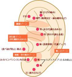 ear_illust - オーラルケアに関するすべて - Everything About Oral Care Fitness Diet, Health Fitness, Acupuncture Points, Healthy Beauty, Reflexology, Medical Care, Massage Therapy, Health Motivation, Health Diet