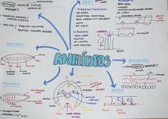 #anelideos #zoologia #biologia #resumo