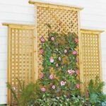 7 Inspiring DIY Garden Trellis Ideas For Growing Climbing Plants Backyard Projects, Outdoor Projects, Garden Projects, Diy Projects, Backyard Ideas, Wall Climbing Plants, Climbing Vines, Climbing Flowers, Diy Trellis