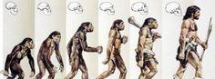 Evolution und Körpergröße