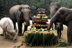zoo de Chonburi pour célébrer le jour des éléphants, le 13 mars.