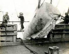 Risultati immagini per whaling 19th century