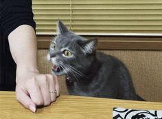 Quand mon chat implore le pardon