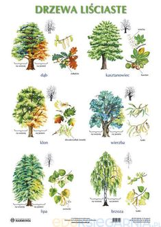 Polish Language, Learning Time, Plant Drawing, Watercolor Trees, Garden Planning, Kids And Parenting, Teaching Kids, Garden Art, Planting Flowers