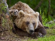 Mom sleeps, and I do not want by Sergei Ivanov