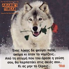 Wolf Quotes, Big Bad Wolf, Greek Quotes, True Words, Deep Thoughts, Beautiful, My Love, Life, Georgia