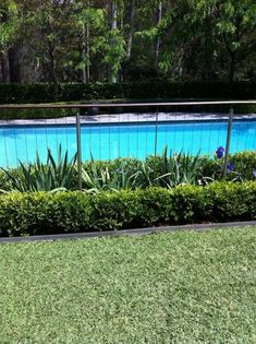 "✔ 25 suitable plants grow beside swimming pool 15 > Fieltro.Net""> 25 Suitable Plants Grow Beside Swimming Pool - Fence Around Pool, Pool Fence, Pool Plants, Fence Plants, Plants Around Pool, Simple Pool, Backyard Pool Landscaping, Landscaping Ideas, Landscaping Software"