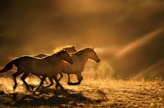running free horse - Google Search