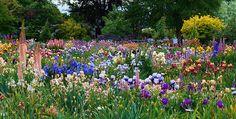 Schriener's Iris Garden by KarlGercens.com GARDEN LECTURES, via Flickr