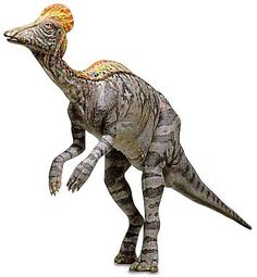 Living in Late Cretaceous period in Montana, North America, CORYTHOSAURUS, or helmet head, was a large hadrosaur, a duck-billed dinosaur.  It had a toothless beak with rows of sharp teeth  in the back of its mouth.The name Corythosaurus comes from its crest, which looks like a helmet worn by ancient soldiers. This crest was probably used to make a loud horn noise. Air from the animal's nostrils was forced through the crest making it vibrant loudly. It measured 33 ft.  8000 lbs.
